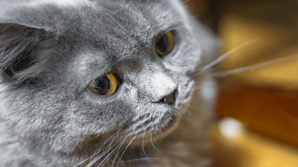 尿路結石の猫が増えている件