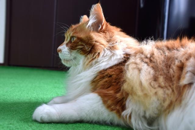 猫の抜け毛対策はぬるま湯で揺さぶれ?お部屋の掃除方法のコツ