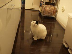 ごはんまち猫