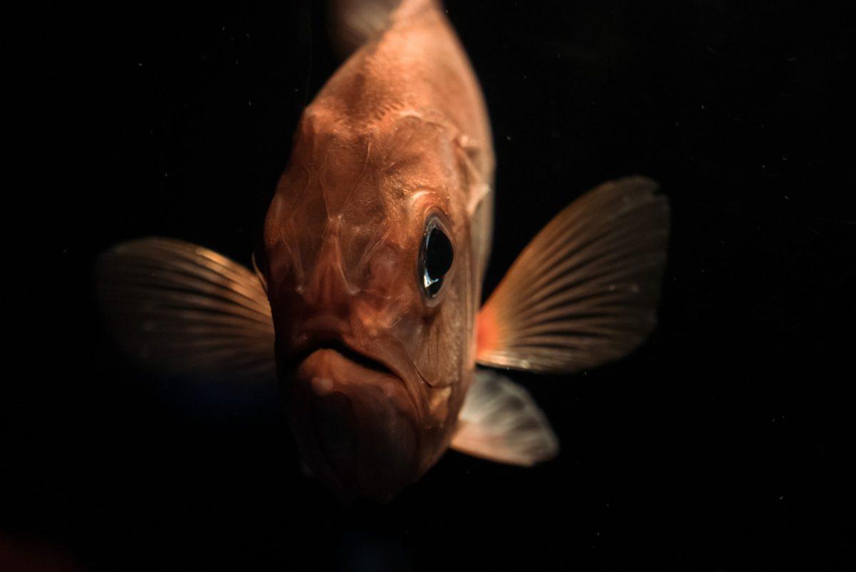 深海という宇宙 | 水深8000mでの魚の撮影に成功