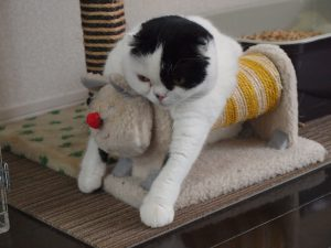 猫,爪とぎ