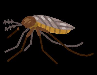 蚊,ボルバキア