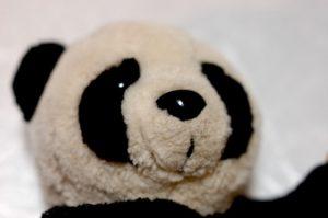 シャンシャンに決定!上野動物園のジャイアントパンダの赤ちゃん