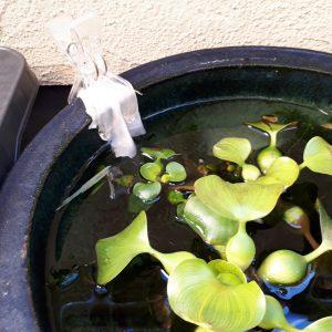 メダカ鉢排水システム
