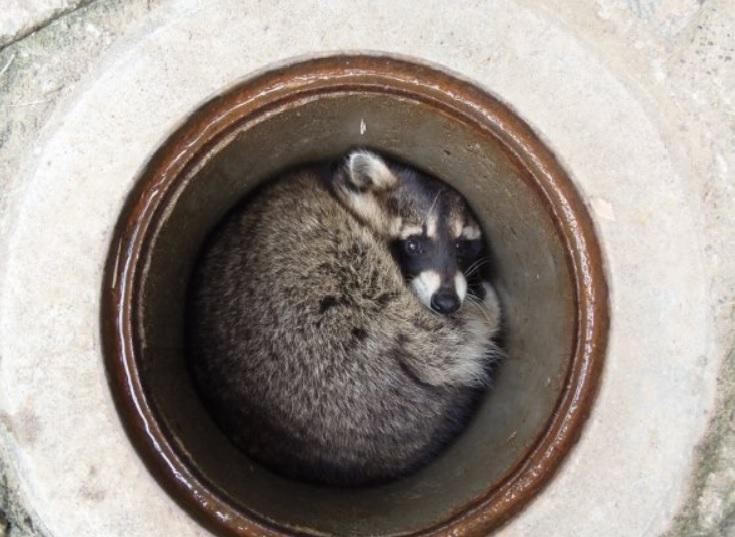 茶臼山動物園,カール