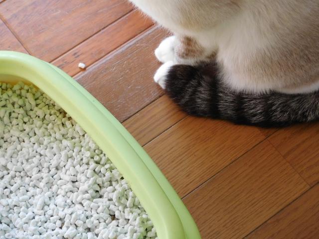 猫がトイレに出たり入ったりしたら | 結石膀胱炎を疑うチェック項目