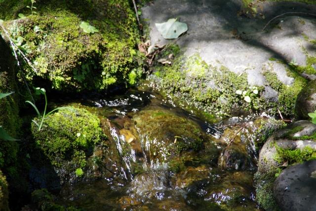 井の頭公園湧水