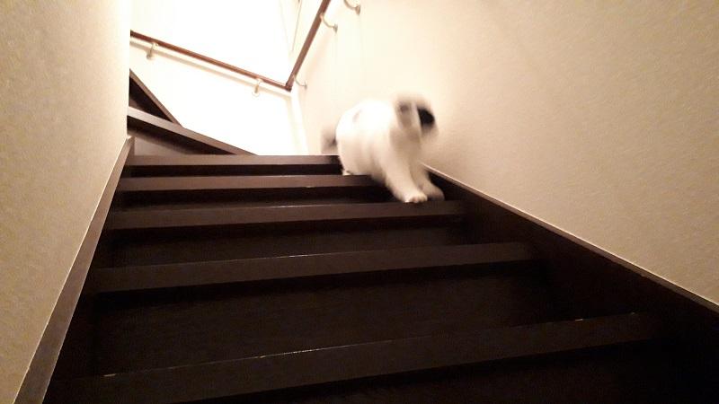 階段用ルンバ