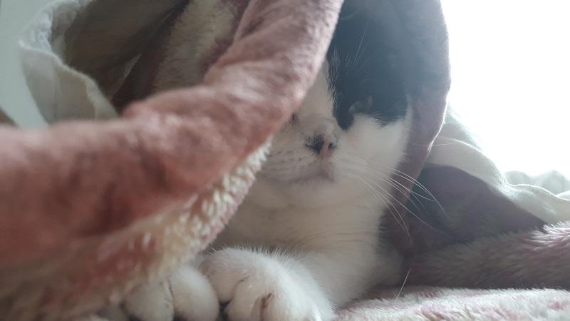 猫の毛掃除ルンバ